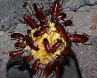 рецепт борной кислоты от тараканов с яйцом рецепт